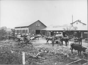 Järnhandlargården Plogar, harvar, hästräfsor och alla andra redskap i jordbruket var stora produkter och gjorde järnhandlar-gården till mötesplats för traktens lantbrukare. Kanske man även passade på att sälja eller byta djur – stuten på bilden ger en antydan om detta.